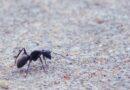 Ako vidiš mrava na putu nemoj ga zgaziti, sjeti se da…